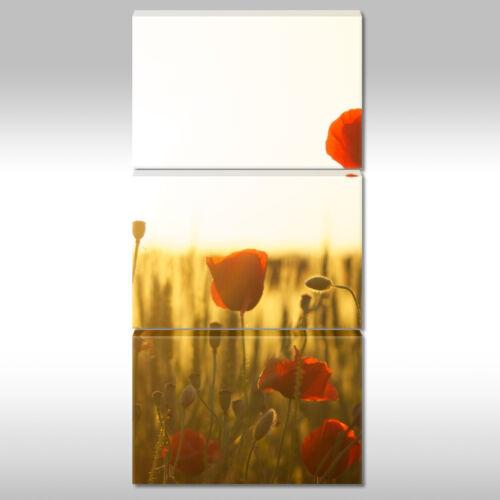 Leinwandbild Canvas Print Wandbild Mohnblumen im Sonnenlicht Nr 1511