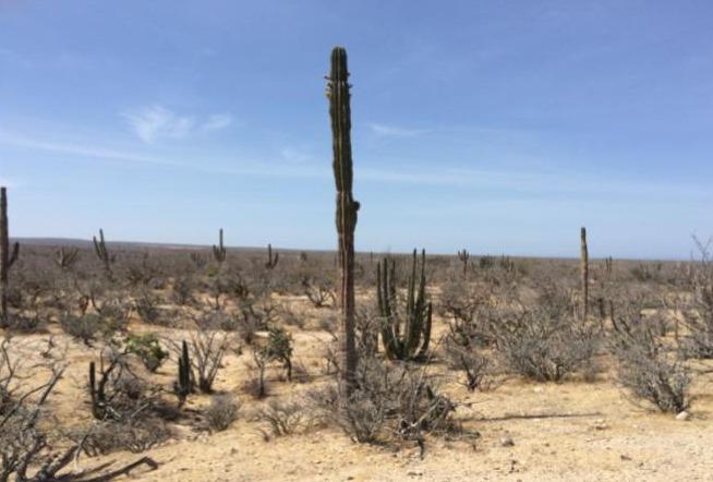 Terreno Rustico Predio Todos Santos (La Paz BCS)