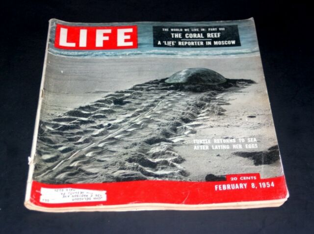 LIFE MAGAZINE FEBRUARY 8 1954 TURTLE RETURN ' S TO SEA