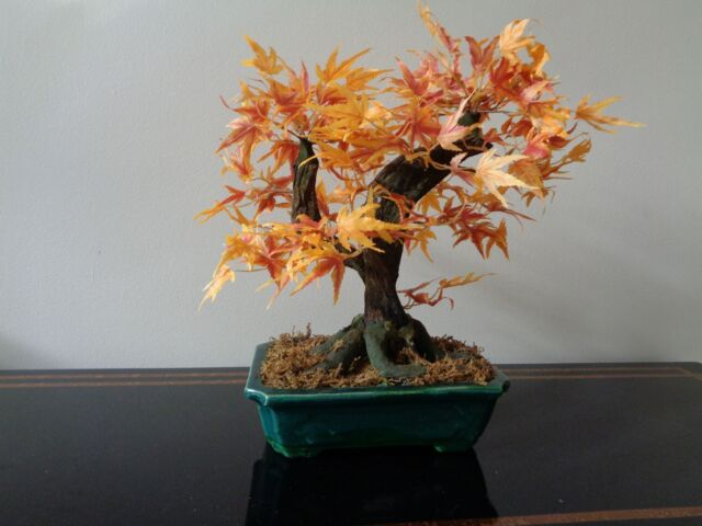 Cedar Bonsai 36 Silk Plant For Sale Online Ebay