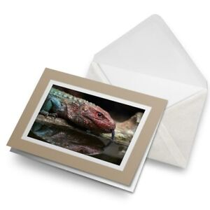 Greetings-Card-Biege-Red-Northern-Caiman-Lizard-3520