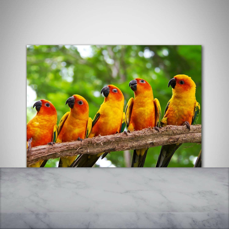Küchenrückwand Spritzschutz aus Glas 100x70 Deko Tiere Papageien auf Ast