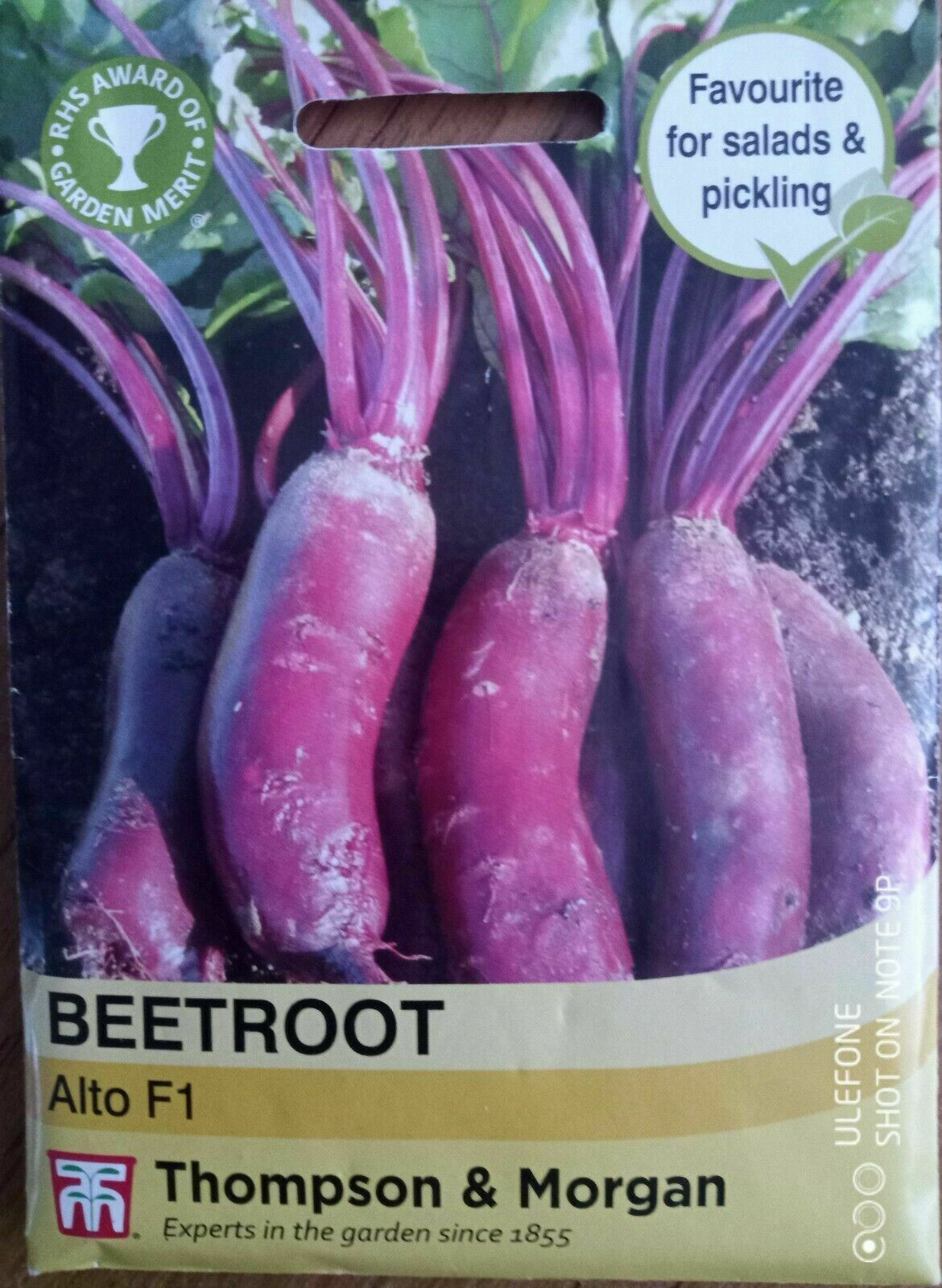 Thompson & Morgan - Vegetables - Beetroot Alto F1 Hybrid - 250 Seeds