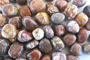 Birds-Eye-Rhyolite-One-Tumbled-Stone-20mm-Healing-Crystals-by-Cisco-Traders