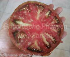 ANANAS NOIRE historische Tomate *10 Samen SELTEN Tomaten schwarz tolles Geschenk