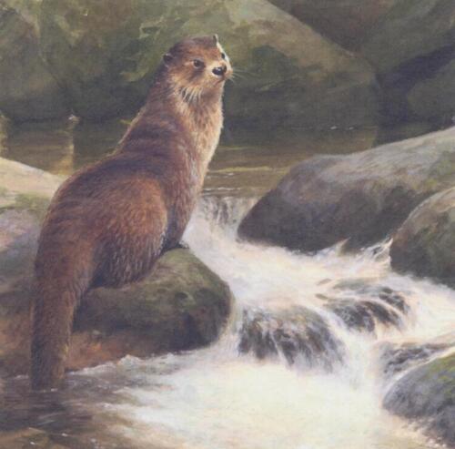 OTTER British Wildlife vide Anniversaire Mères Père Jour Carte de vœux