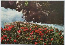 Schöne alte Ansichtskarte AK - Condore e musica d´acqua fra cocce e rose dell