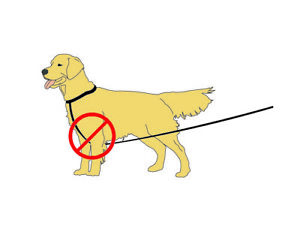 LEASH-ALI-Keeps-your-pet-leash-tight-so-your-pet-does-not-get-tangled-in-it