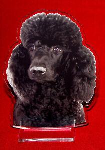statuette-photosculptee-10x15-cm-chien-caniche-12-dog-hund-perro-cane