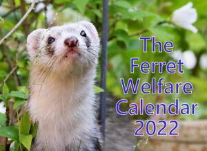 Ferret Welfare A4 Landscape Wall Calendar 2022
