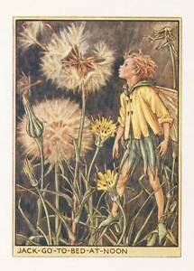 Flower-Fairies-The-Jack-Go-To-Bed-at-Noon-Fairy-Vintage-Print-c1930-Cicely-Mary