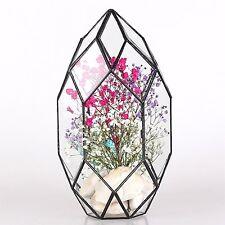 Large Irregular Polyhedral Geometric Glass Terrarium Lantern Succulent Plant 11