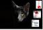 Enzymreiniger-Geruchsentferner-Katzenurin-Tierurin-Urinsteinentferner-BIo-ab-1-L Indexbild 1