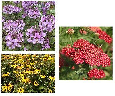 Origineel 3 Blumensorten Im Sparset: Spinnenblume + Schafgarbe + Gelbe Hirta Goedkope Verkoop 50%