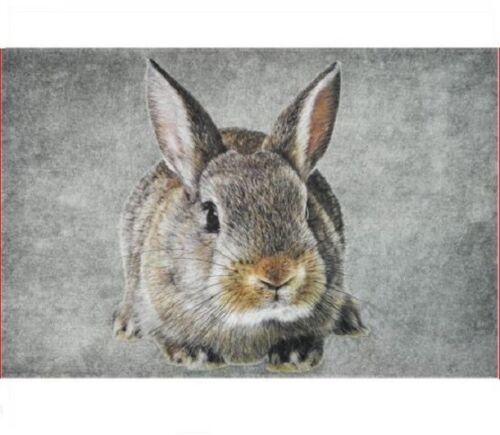 Fußmatte Kaninchen NEU Fussmatte Türmatte Hase rabbit