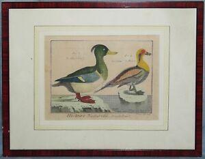 """Kupferstich Enten, """"Le Morillon, Le Canard de Miclon"""", Benard 1770, coloriert"""