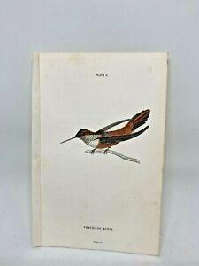 1st-Ed-Hand-colored-Jardine-039-s-Natural-History-1834-Rufus-Hummingbird-11