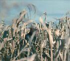 Free State Serenade [Digipak] by Chuck Mead (CD, Mar-2014, Plowboy)