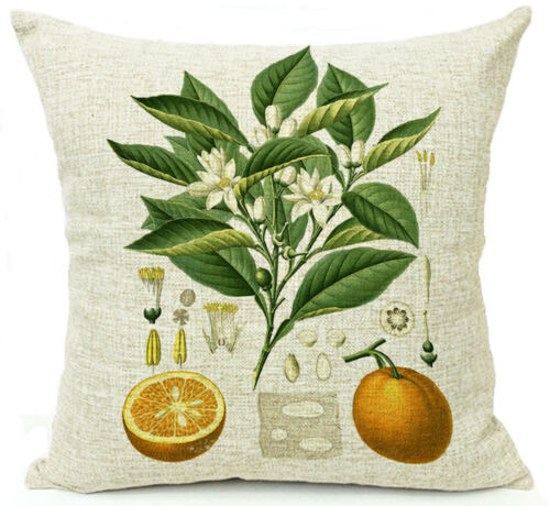 Historische Bildtafel Orangenbaum Kissenbezug Kissenhülle Canvas-Stoff