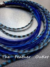 Lot 10 Grizzly Feathers Hair Extensions long thin skinny striped ROYAL BLUE