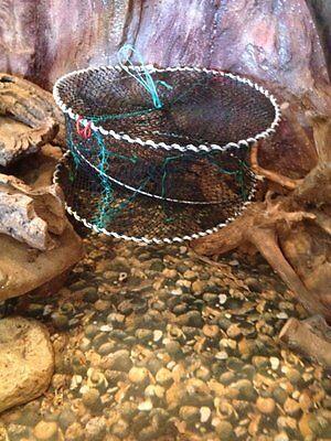 Fischreusen,Aalreusen,Krebsreusen,Reusen,Reuse Köderdose,40 x 80cm,Top preis!