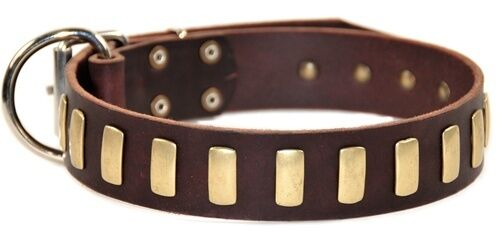 Dean & Tyler Plated Perfection Leather Dog Collar - Brass Plates & Nickel Buckle