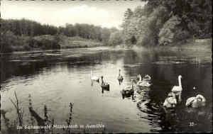 Aumühle Schleswig Holstein s/w Postkarte ~1950/60 Im Sachsenwald Am Mühlenteich