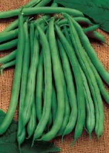 50 French Green Bean Blue Lake Phaseolus Vulgaris Seeds Ebay