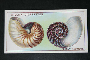 Pearly Nautilus   Original 1920039s Vintage Illustrated Card   VGC - <span itemprop=availableAtOrFrom>Melbourne, Derbyshire, United Kingdom</span> - Returns accepted Most purchases from business sellers are protected by the Consumer Contract Regulations 2013 which give you the right to cancel the purchase within 14 days  - Melbourne, Derbyshire, United Kingdom