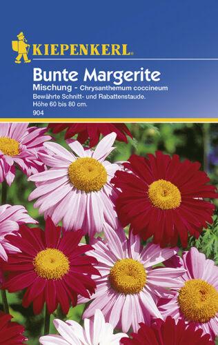 Coloré Fleur pluriannuelle chyrsanthemum vivaces Coupe Fleur environ 40 graines