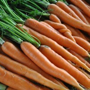 2,500 Giant Nobel Spinach seeds Bulk Microgreens Organic Non gmo USA Harvested