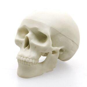 Favorite Hone-keshi Human Skull eraser skleton Best buy Gift New F/S