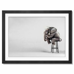 A3-Funny-Elephant-Sitting-Down-Framed-Prints-42X29-7cm-16786
