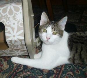 SPONSOR-ME-BUY-ME-DINNER-AKIRA-LINCOLN-CAT-CARE-CHARITY-AUCTION