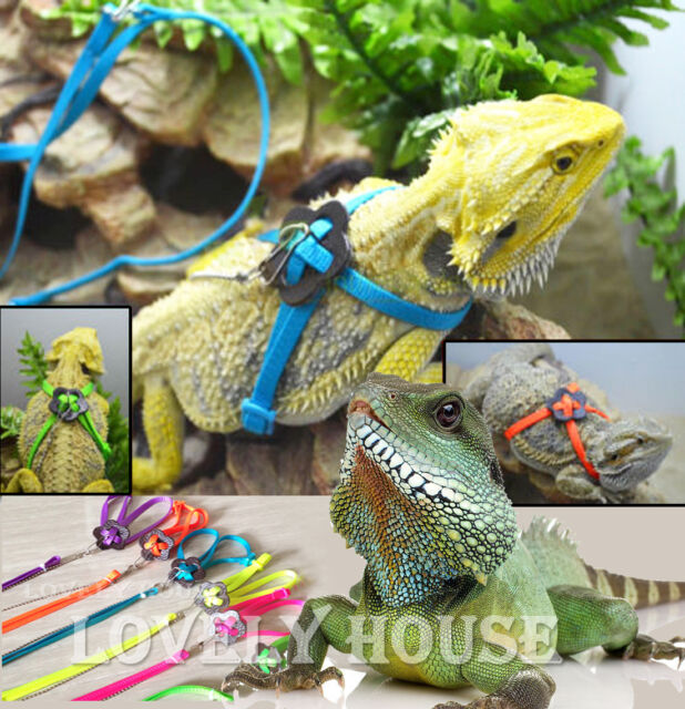 Adjustable Reptile Lizard Harness Leash Adjustable Multicolor Light Soft Fashion