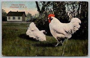 Cincinnati-Ohio-Cheviot-Farms-Cockerel-Chickens-Champion-II-amp-Snow-Lady-II-1910