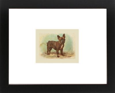 Antique Victorian BOSTON TERRIER Liver Brindle DOG Hat Lady Stockings Art Print