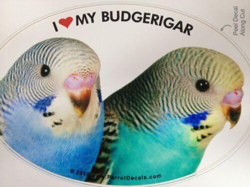 Budgerigar Budgie Parrot Exotic Bird Vinyl Decal Bumper Sticker
