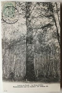 826-Ancienne-Carte-Postale-Lyons-la-Foret-le-Gros-Chene