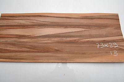 Satiné red gum 73x29cm ép 0.6mm ib placage bois marqueteria, Lutherie luthier