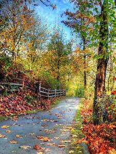 NATURE-LANDSCAPE-CULTURAL-FOREST-PATH-ROAD-TREE-POSTER-ART-PRINT-PICTURE-BB1422B