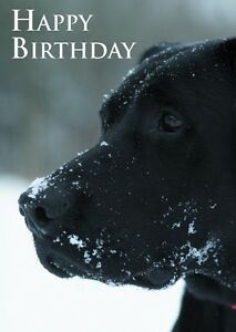 Image Is Loading Birthday Card Black Labrador In Snow Perfect For