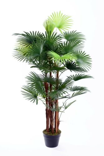 Best Artificial SPIDER Finger PALM Tree PLANT Office Conservatory home office