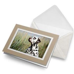 Greetings-Card-Biege-Dalmatian-Puppy-Dog-Pet-15870