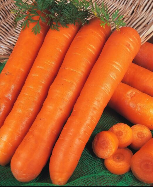 ORGANIC Carrot Nantes 2 Appx 1600 seeds  (2gms) - Vegetable