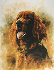 IRISH RED SETTER GUNDOG DOG FINE ART LIMITED EDITION PRINT - Head Study