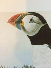 Atlantic Puffin John James Audubon Bird Print Picture Poster Number 218