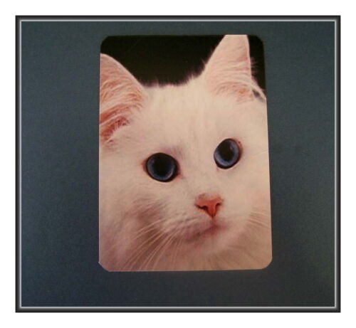 WHITE KITTEN WITH BLUE EYES REFRIGERATOR MAGNET NOT EASY BEING THIS BEAUTIFUL