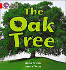 Collins Big Cat: The Oak Tree: Band 02B/Red B by Anna Owen (Paperback, 2012)