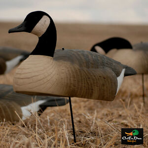 Canada Goose mens sale cheap - Avery Greenhead Gear GHG Hot Buy Canada GOOSE Shell Decoys Dozen ...